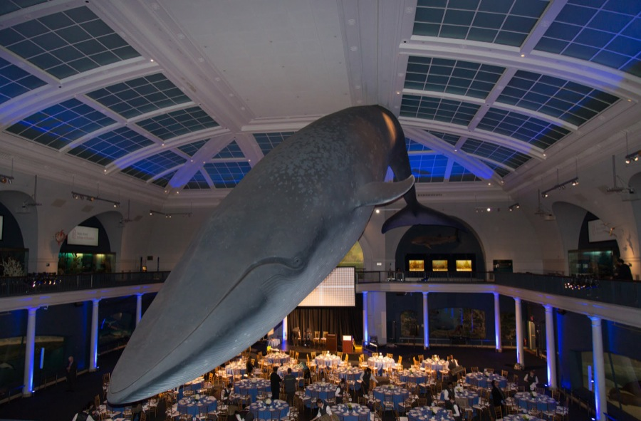 The Blue Whale, in the Irma and Paul Milstein Family Hall of Ocean Life