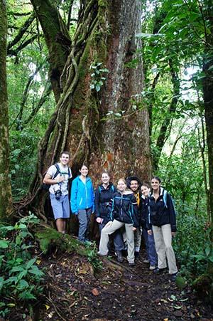 Strangler Fig Tree & Group (K. D'Auria)